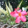 フラワーショップ「Orchid(オーキッド)」